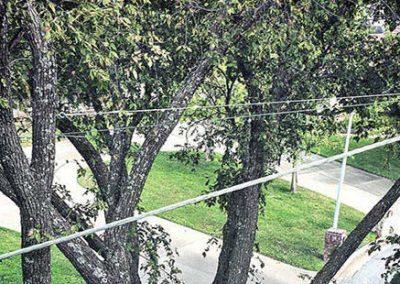 tree-bracing-service-box-1